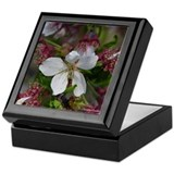 Wheeping Cherry Keepsake Box