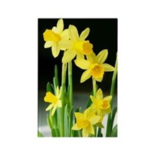 Sunny Daffodils Rectangle Magnet