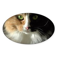 The Cat's Eyes Oval Decal
