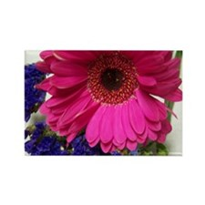 Cute Pink gerbera daisy Rectangle Magnet (10 pack)