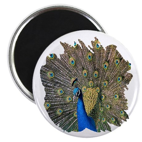 "Peacock 2.25"" Magnet (10 pack)"
