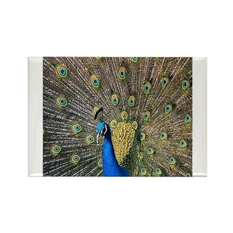 Peacock Rectangle Magnet