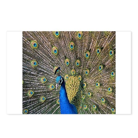 Peacock Postcards (Package of 8)