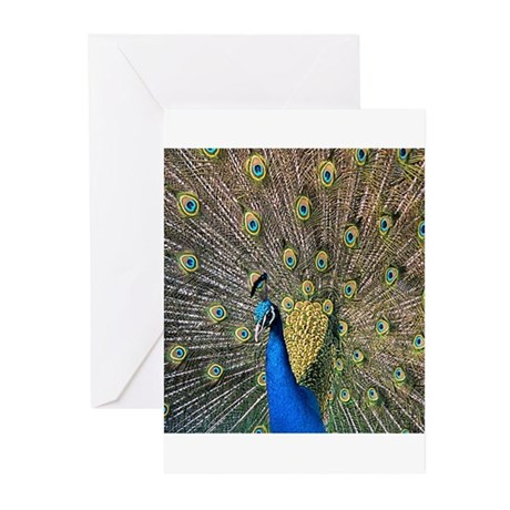 Peacock Greeting Cards (Pk of 20)