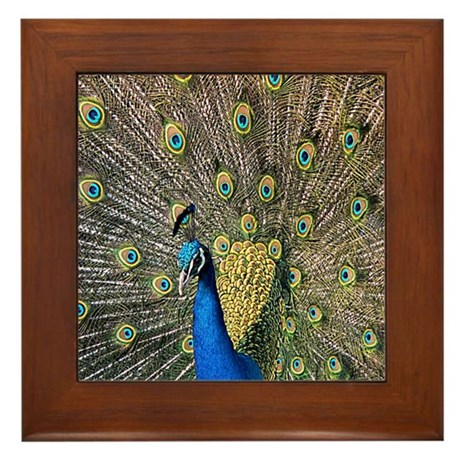 Peacock Framed Tile
