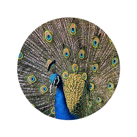 "Peacock 3.5"" Button (100 pack)"
