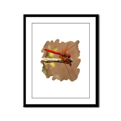 Red Dragonfly Framed Panel Print