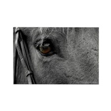 Horse Eye Rectangle Magnet (100 pack)