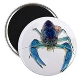 Blue Crayfish Magnet