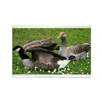 Odd Goose Couple Rectangle Magnet (10 pack)