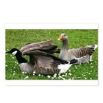 Odd Goose Couple Postcards (Package of 8)