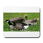 Odd Goose Couple Mousepad