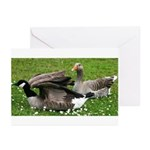 Odd Goose Couple Greeting Cards (Pk of 10)
