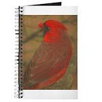 Northern Cardinal Journal