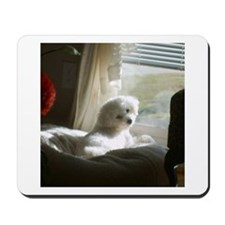 DAY DREAMING BICHON MOUSEPAD