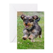 Black Wirehair Greeting Cards (Pk of 20)