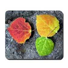 Fall Aspen Leaves Mousepad