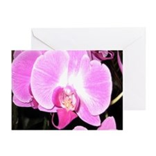 Costa Rica Orchid Greeting Cards (Pk of 20)