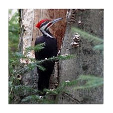 Pileated Woodpecker Tile Coaster