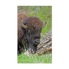 Buffalo Wood Pile Rectangle Decal