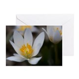 Cute Arboretum Greeting Cards (Pk of 20)