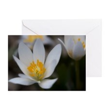 Unique Arboretum Greeting Cards (Pk of 20)