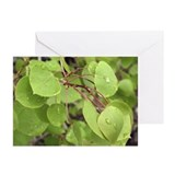 Aspen Leaves Greeting Cards (Pk of 10)