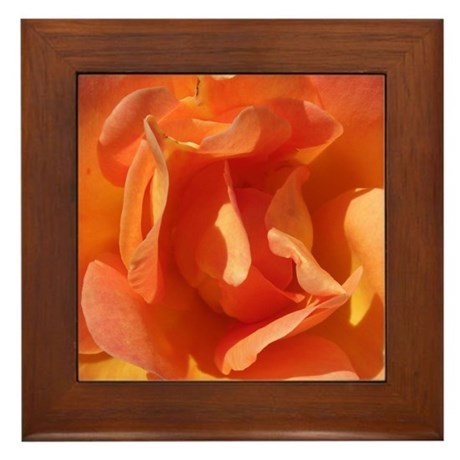 Rose Close Up Framed Tile