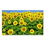 Sunflower Cluster Rectangle Sticker