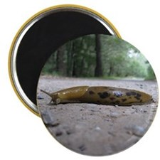 Banana Slug in Forest Magnet
