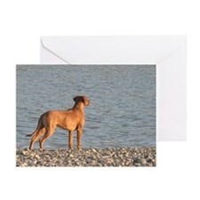 Unique Puppy Greeting Cards (Pk of 10)