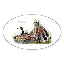 Audubon Mallard Ducks Oval Sticker (10 pk)