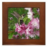 Male Hummingbird Framed Tile