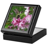 Male Hummingbird Keepsake Box