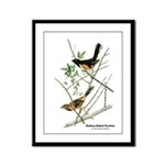 Audubon Towhee Bird Framed Panel Print