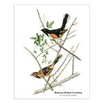 Audubon Towhee Bird Small Poster