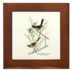 Audubon Towhee Bird Framed Tile