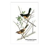 Audubon Towhee Bird Postcards (Package of 8)