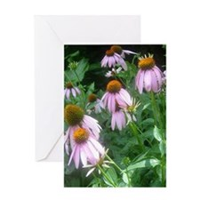 NOTE CARD STORE: Pink Daisies Greeting Card