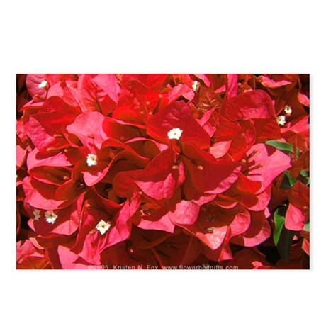 Red Bougainvillea Postcards (Package of 8)
