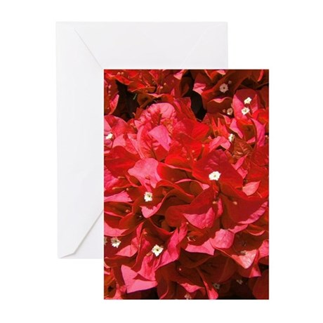 Red Bougainvillea Greeting Cards (Pk of 10)