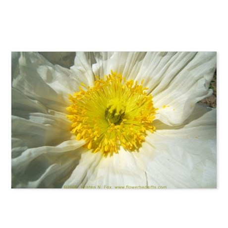 White Icelandic Poppy Postcards (Package of 8)