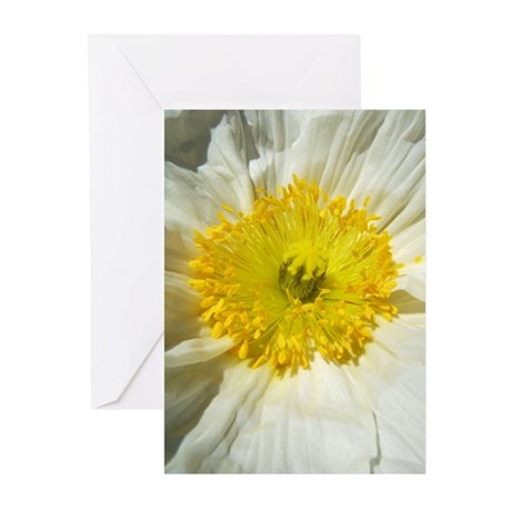 White Icelandic Poppy Greeting Cards (Pk of 10)