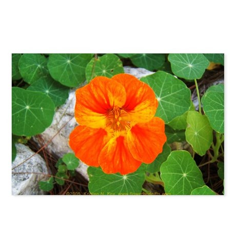 Orange Nasturtium Postcards (Package of 8)