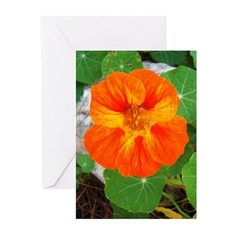Orange Nasturtium Greeting Cards (Pk of 10)