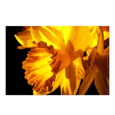 Yellow Daffodil Postcards (Package of 8)