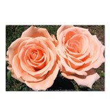 Peach Rose Postcards (Package of 8)