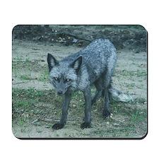 Silver Fox Mousepad