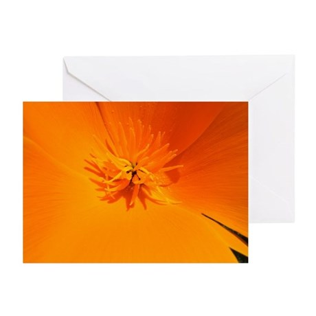 California Poppy Greeting Cards (Pk of 10)