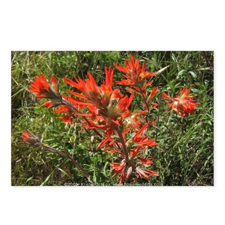 Indian Paintbrush Flower Postcards (Package of 8)